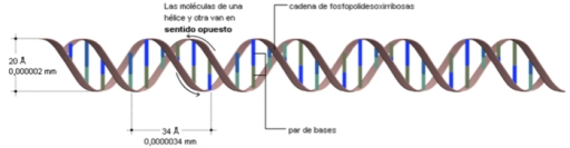 DNA_Doble Helice